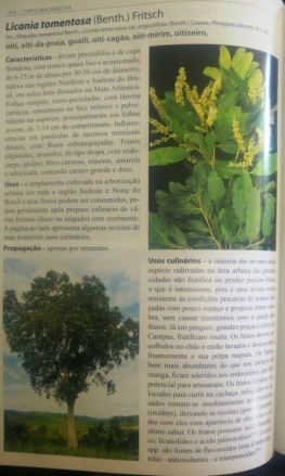 A planta do oitizeiro